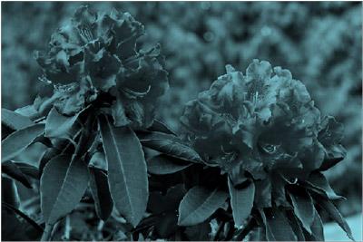 Image avec effet de recolorisation bleu-vert