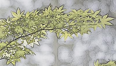 복사 효과를 적용한 나뭇잎