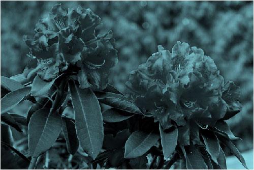 Imagem com efeito de recoloração azul-petróleo